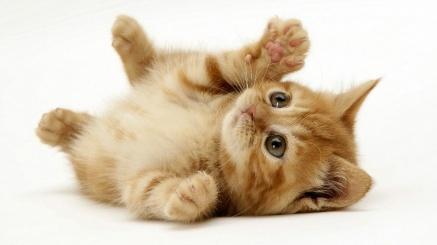 Here's a kitten, now shut up
