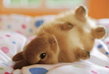 Here's a bunny. He's fallen over. Oh, how delightfully whimsy.